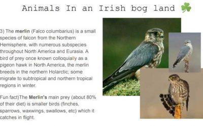 Irish Bogs